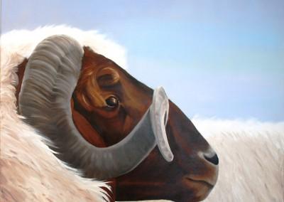 Het oude schaap